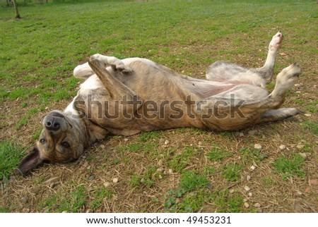 cuddly dog - stock photo