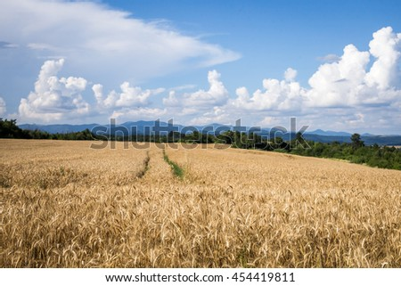 Cultivated farmland fields of the countryside - stock photo