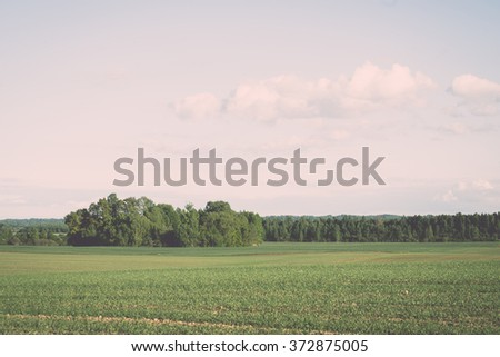 cultivated field and blue sky with sun in summer - vintage effect - stock photo