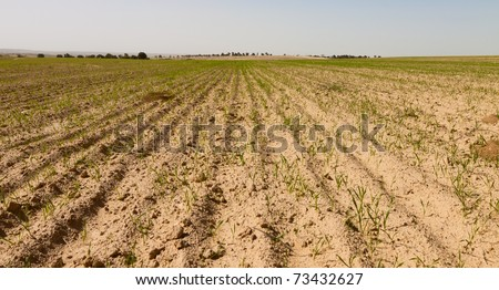 Cultivated field in the desert