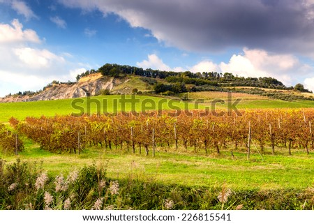 Cultivated fields of red Vineyards during Autumn  on badlands background in Italian countryside near Brisighella in Emilia Romagna