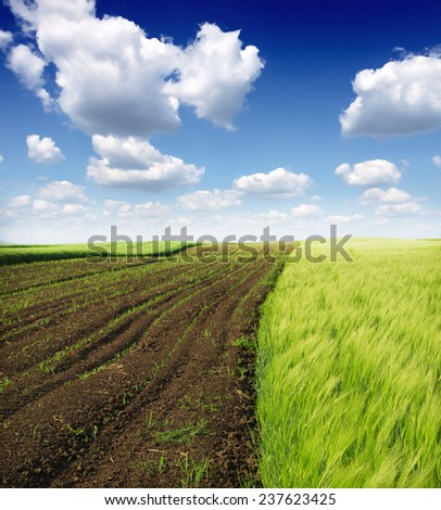 Cultivated green meadow. Rural scene. - stock photo
