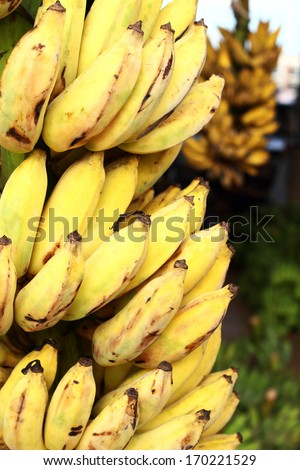 how to find gros michel bananas