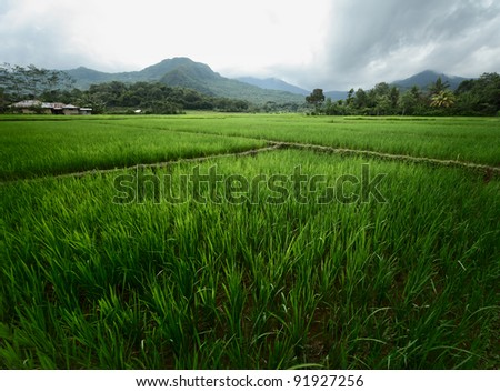 Cultivated land in a mountains of Indonesia - stock photo