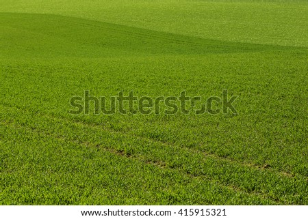Cultivated land with nice looking grass.