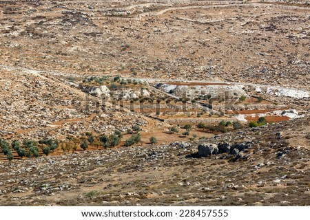 Cultivated palestinian field and olives tree in a mountain near Hebron, Israel - stock photo