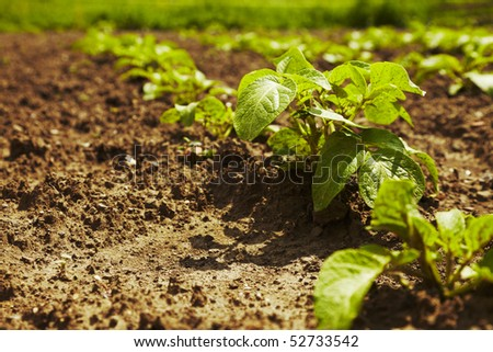 Cultivated plants on field - stock photo
