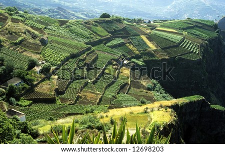Cultivated terraced fields on the cliff top on the island of Madeira - stock photo