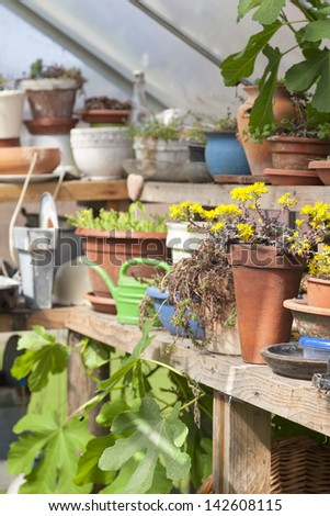 cultivating plants in a private garden greenhouse. - stock photo