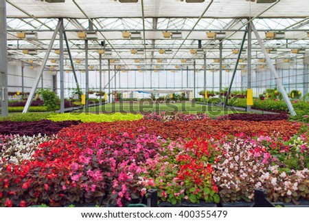 Cultivation flowers in greenhouse in spring - stock photo