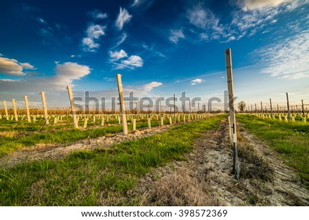 cultivation of fruit trees in the countryside of Emilia Romagna in Italy, seedlings with plastic and cement brace
