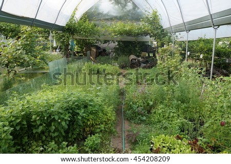 Cultivation of plants in a greenhouse
