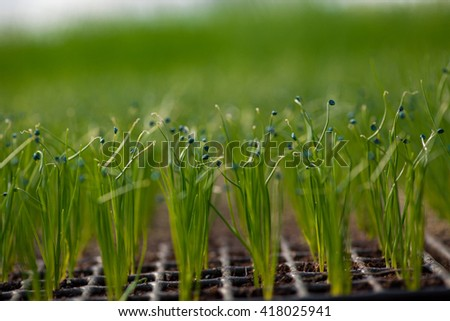 Cultivation of seedlings Ecology World Environment Day CSR Seedling Go Green Eco Friendly Earth Health Care Food Garden New Life concept - stock photo
