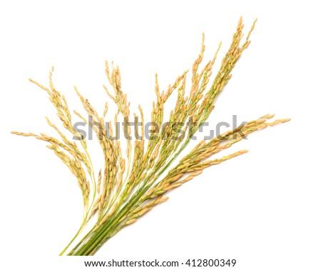 cumin seeds isolated on white background - stock photo
