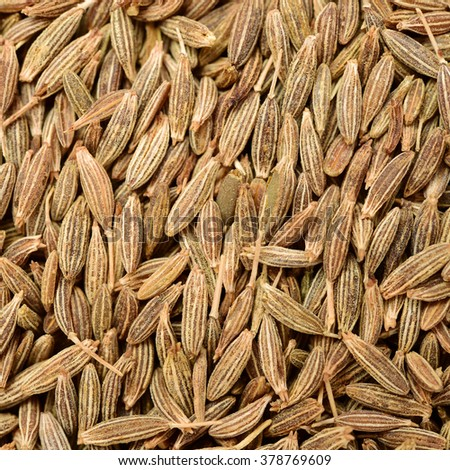 Cumin seeds texture, full frame background. Second most popular spice in the world after black pepper. - stock photo