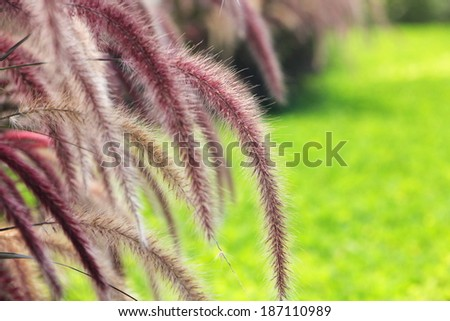 Cuontry road side landscape - stock photo