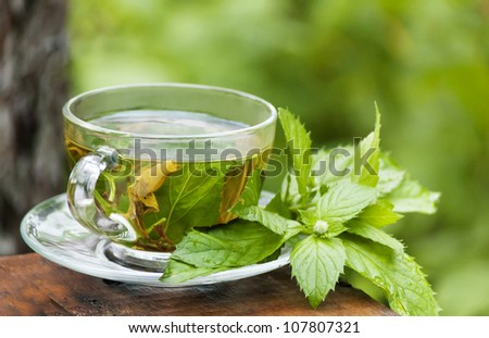 cup of green mint tea at  morning garden