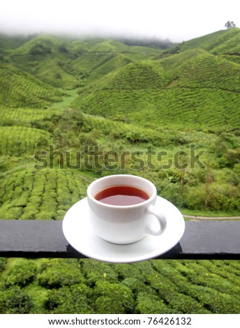 Cup of tea background of tea plantations - stock photo