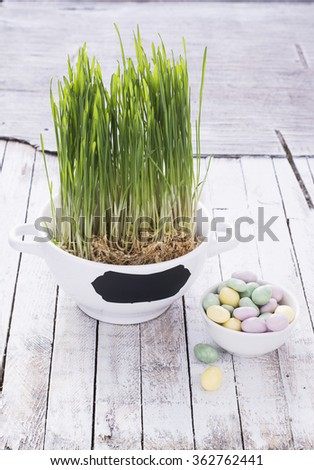Cup with grass sprouts for Easter with bright colored candy eggs in a small piala a simple white wooden background. selective Focus - stock photo