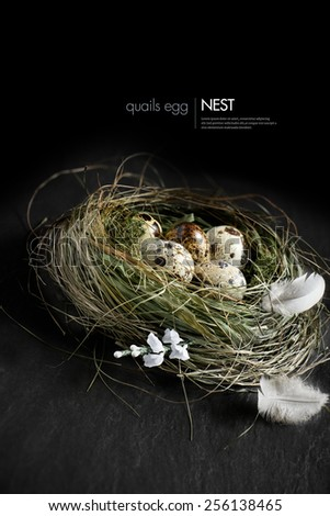 Curated concept image for Easter, pension funding, or investments. Genuine quail eggs in a authentic grass birds nest against a dark background. Copy space. - stock photo