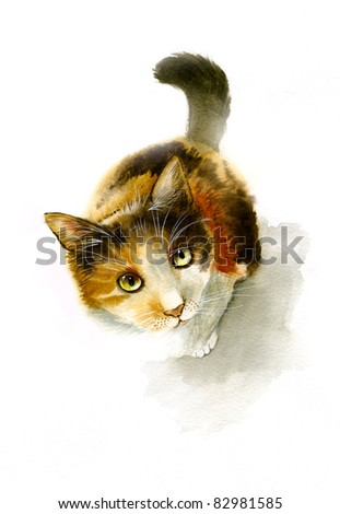 Curious cat - stock photo