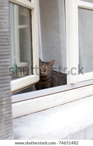 curious cat at window-sill - stock photo