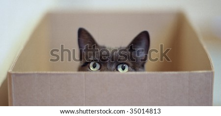 Curious cat in a carton box