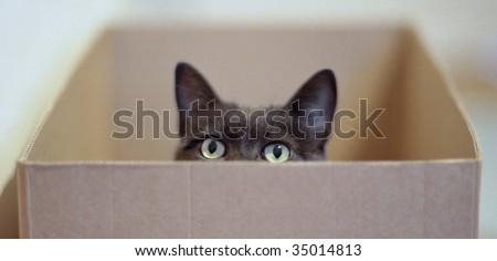 Curious cat in a carton box - stock photo
