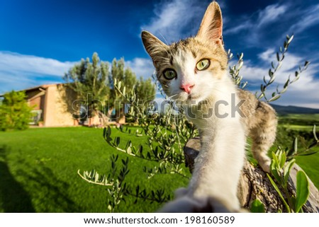 Curious cat in the countryside, Tuscany - stock photo