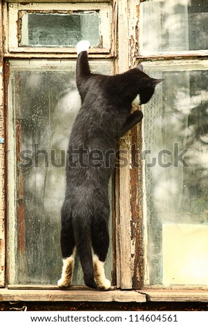 curious cat in the window - stock photo