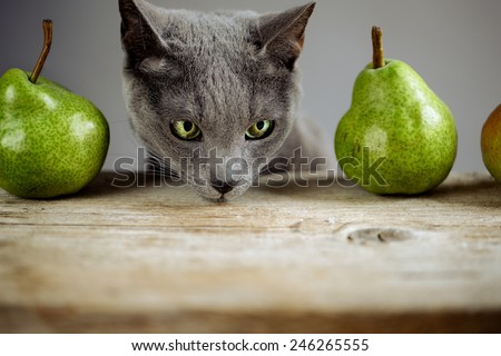 Curious Cat inspecting fresh ripe Pears - stock photo