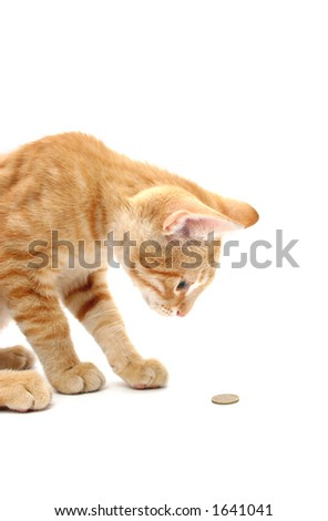 curious cat looking at coin, on white background - stock photo