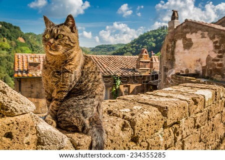 Curious cat on the stone wall in the town - stock photo