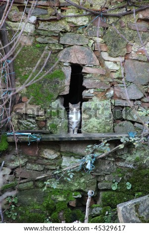 Curious cat peering through hole in wall of farm house - stock photo
