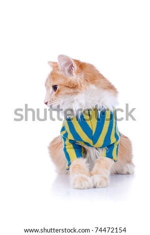 curious cat wearing clothes and looking to its side, on white background - stock photo