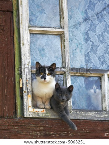 curious cats by a window - stock photo