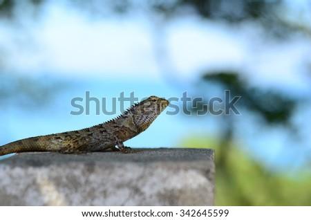 curious chameleon  - stock photo