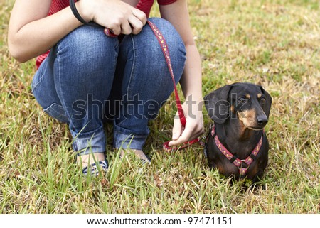 Curious Dachshund dog and owner - stock photo