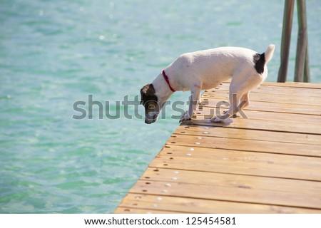 Curious dog - stock photo