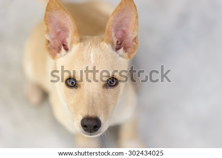 Curious dog is looking up with wonder in its beautiful magnetic eyes. - stock photo