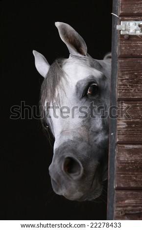curious horse - stock photo