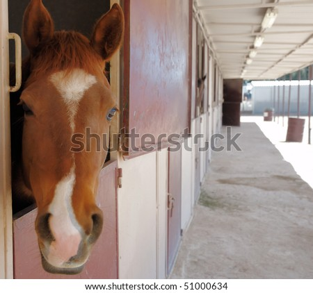 Curious horse - stock photo