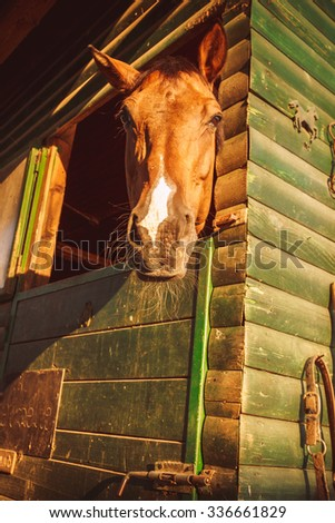 Curious horse looking out of his stall in the sun. - stock photo