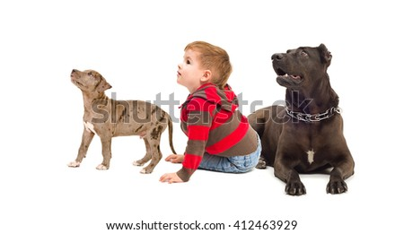 Curious kid and dogs isolated on white background - stock photo