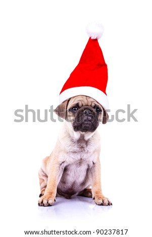 curious little pug puppy wearing a santa hat, sitting on white background - stock photo