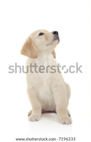 Curious puppy against white background - stock photo