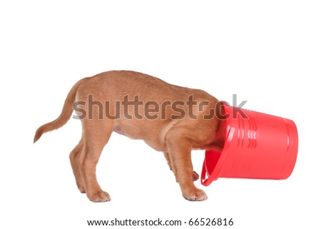 Curious Puppy Hiding in Bucket, Isolated - stock photo
