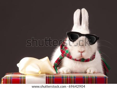 Curious rabbit in sun glasses is on gift box over dark background