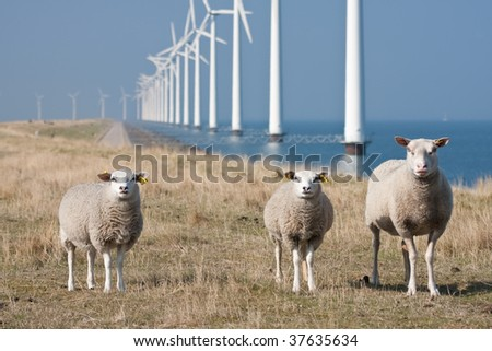 Curious sheep grazing at the dike with a long row of windmills in the sea - stock photo