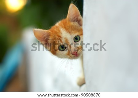 curious small red kitten with beautiful green eyes peeking out from white wall. outdoors - stock photo